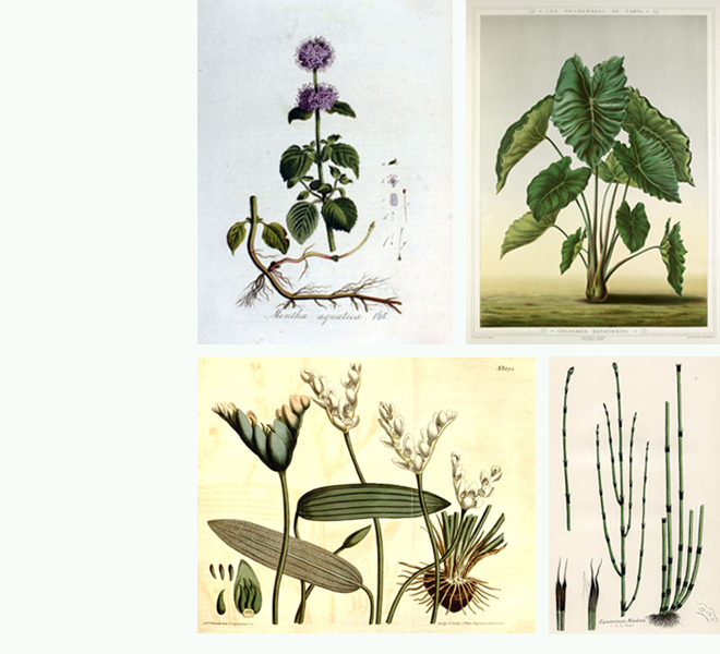 images/projets/silenzio/006-silenzio_plantes-660x600.jpg